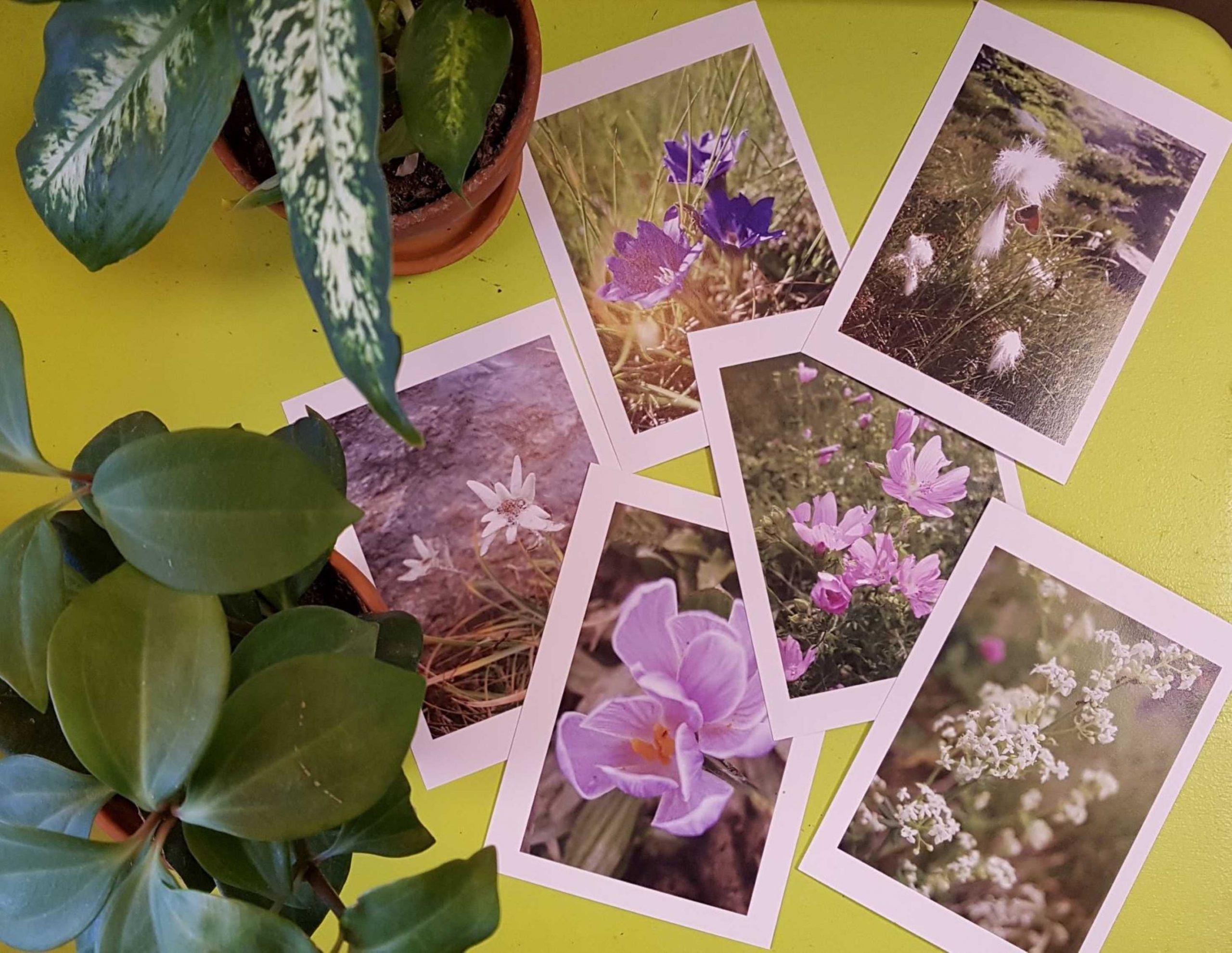 Cartes postales La lIbrai'bulles