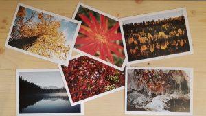 Cartes postales sophoe planque librairie la librai'bulles