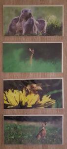 cartes postales natures